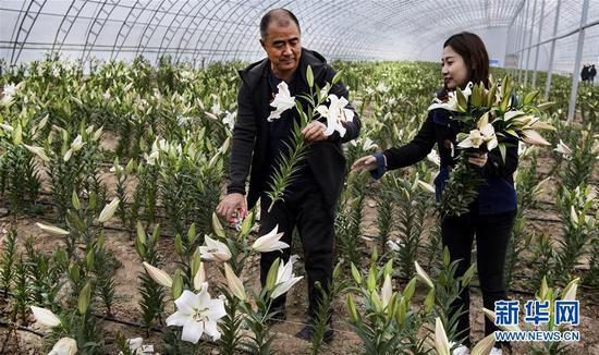 10月19日,惠民惠农专业合作社工作人员在大棚里为顾客采摘鲜花。