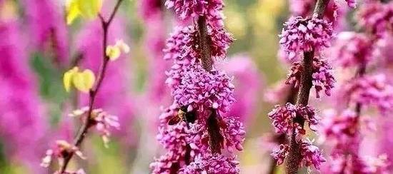 春暖花开季,正是赏花时。