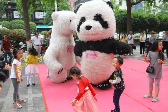 国宝大熊猫与北极熊520前的真情告白