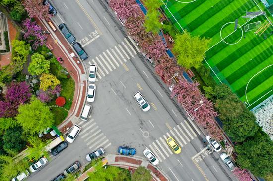 """步步有景,月月有花 高新区高新二路被评为""""高颜值""""街区"""