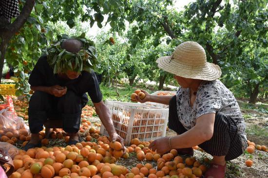 影视明星的助农扶贫带货记