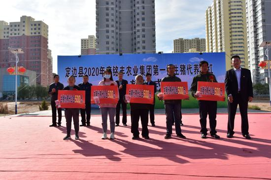 定边县举行生猪代养分红发放仪式