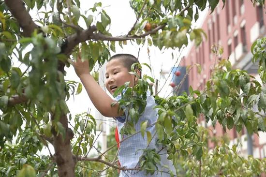 孩子们小心翼翼摘油桃
