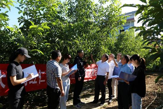 市林业局对洛南红仁核桃产量进行