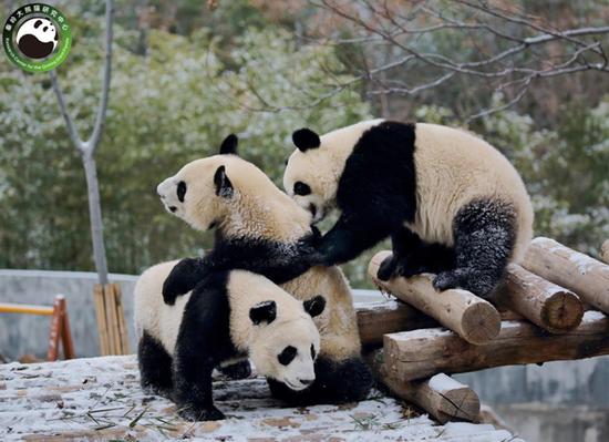 陕西将在西安长安区滦镇建设秦岭大熊猫科学公园