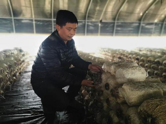 西安阎良年入60万元的蘑菇种植家庭农场
