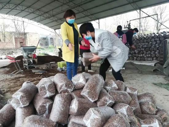 好政策推动好产业 阎良蘑菇种植家庭农场产销两旺