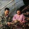 男子带家人在西安打拼种香菇