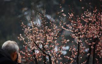 西安植物园举办梅花展 邀您踏雪寻梅