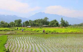 西安城南最美最后的稻田!