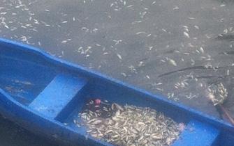 西安护城河现大量死鱼