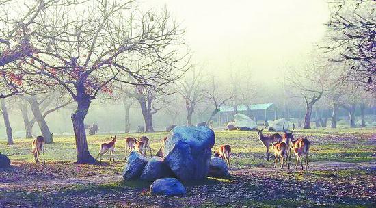 西安秦岭野生动物园等8家景区上黑名单