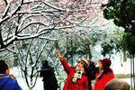 古城春雪至梅花香满园 降雪结束今明早晨很冷