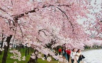不用去外省外国 大西安也有最美赏花地