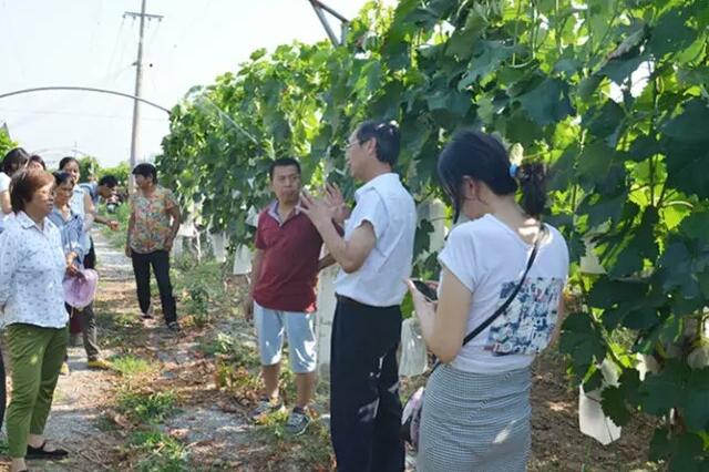 阎良区农林局积极开展葡萄技术培训