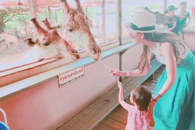 昆凌带小周周逛动物园 母女携手喂长颈鹿画面有爱