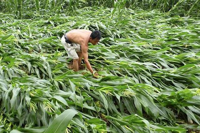 商南镇安两县发生洪涝灾害 农作物受灾面积170公顷