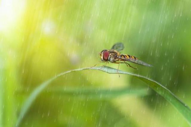 今起至月底西安多阴雨 全省降雨集中在这些地方
