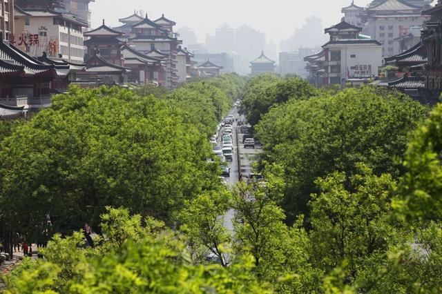 西安城里那些因绿而美的路