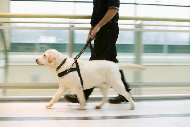 西安导盲犬走失牵动人心 众人帮它找到回家路