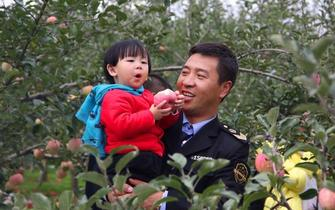 洛川苹果树上摘,助力脱贫味道鲜
