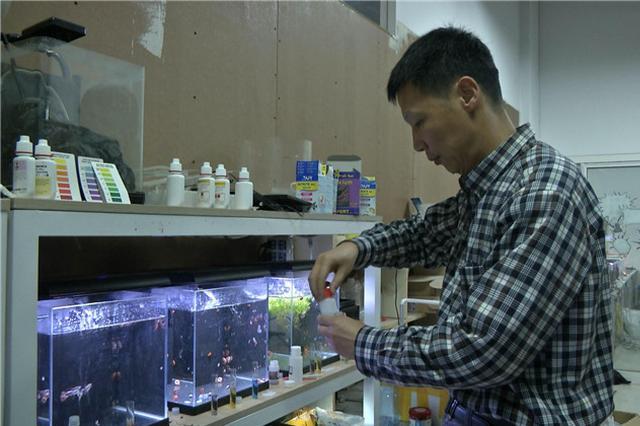 厉害!西安一大叔研发智能鱼缸 水质稳定永不换水