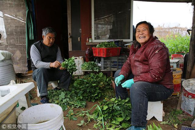 农村大妈进城种菜 患癌10年如今身体倍棒