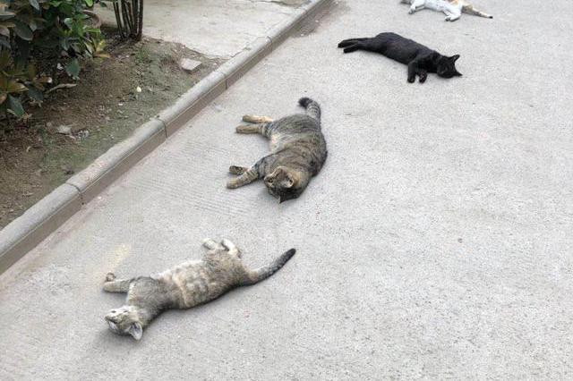 """西安一小区六只猫疑遭下毒 连""""孕妈""""都不放过"""