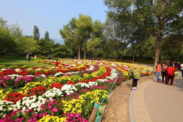 景观花刚摆好就被偷盗 和平路10天丢了100多盆