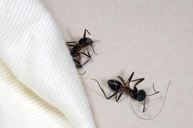 顾客住酒店遭蚂蚁爬身追踪:店方被责令整改