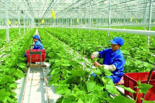 """陕西2.96亿元资金支持""""3+X""""现代特色农业发展"""