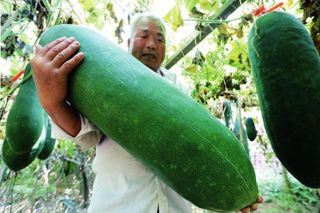 种菜40年 西安一男子靠种冬瓜盖起了新房