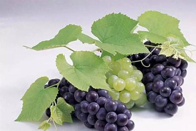 葡萄吃多了 西安一位尿毒症患者险些丢掉性命