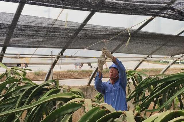 """西安阎良:电网改造助力""""南果北种"""" 亩均收入15万元"""