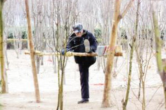 """老人健身把树当单杠 人和物品都""""挂""""树上"""