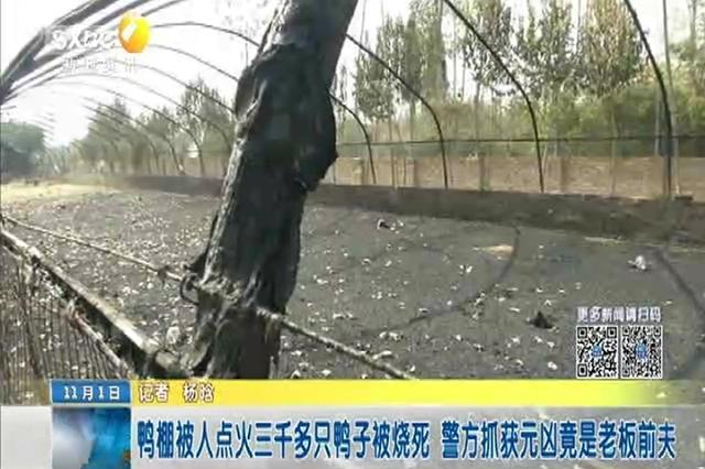 鸭棚被人点火三千多只鸭子被烧死 警方抓获元凶竟是老板前夫