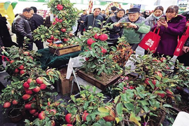 农高会上亮点多 盆栽结苹果A4纸上种出芽菜