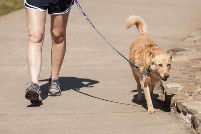 宠物楼道排泄主人视而不见 业主贴公告呼吁文明养犬