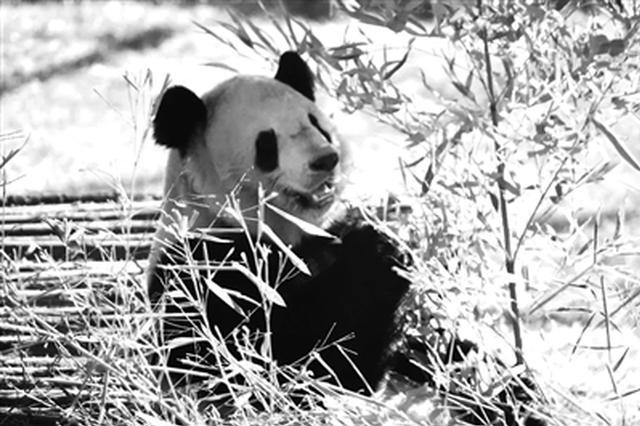西安秦岭野生动物园新春庙会探营 与动物一起过大年