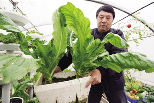 西安市民七楼顶建空中菜园 种植蔬菜够两个家庭吃