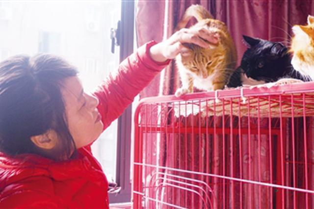 女子15年救助百余只流浪猫狗 有人看中无偿送出