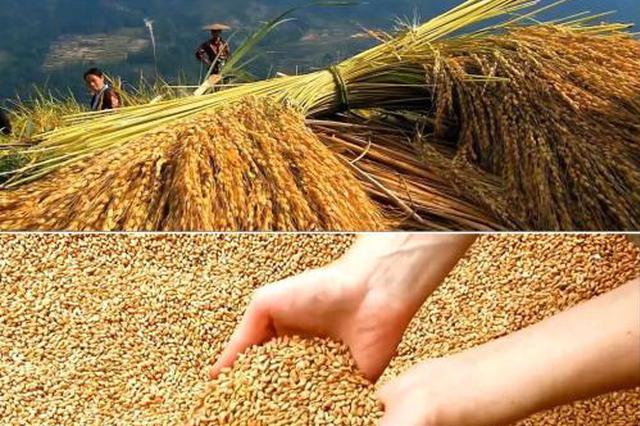 陕西省粮食总产连续8年稳定在1200万吨左右
