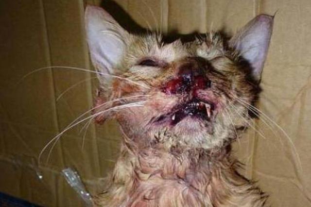 男子网上发虐猫照片引众怒 网友建议法律追责
