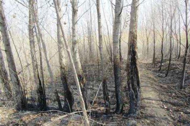 2200棵树一夜之间被烧毁 疑似人为纵火警方立案调查