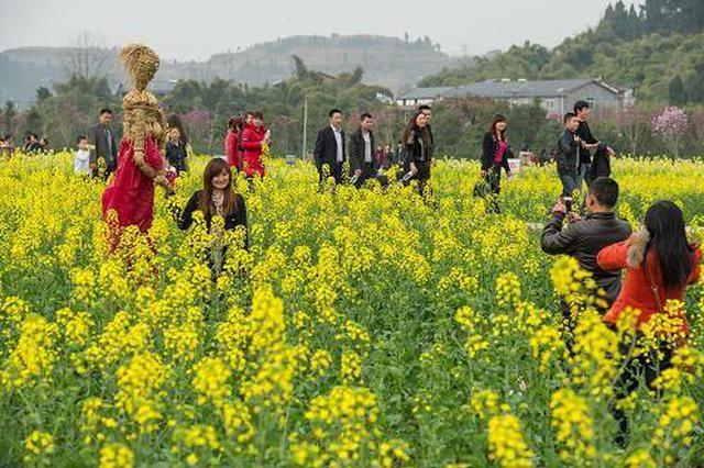 游客反映杨凌油菜花节成卖家秀 政府叫停批评教育