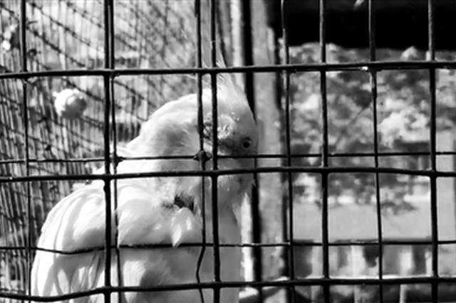 """小区设铁笼""""鸟语林""""圈养鹦鹉麻雀 记者采访遇阻"""