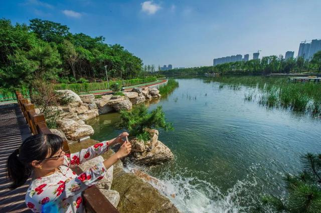 保护秦岭 | 优秀河长曹磊:最美的浐河在眼中、在心上