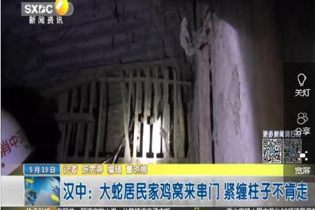 汉中:大蛇居民家鸡窝来串门 紧缠柱子不肯走