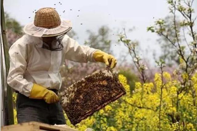 """宝鸡大力发展蜂产业 """"甜蜜事业""""助力脱贫攻坚"""