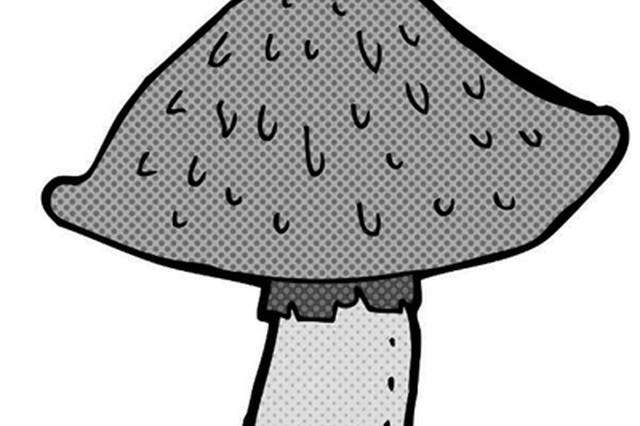 西安发布毒蘑菇中毒预警 禁农家乐加工制售野生蘑菇